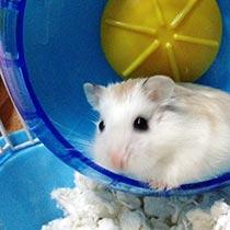 powerless hamster